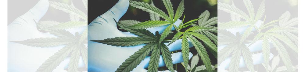 Políticas de drogas